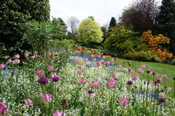 Picture of seasonal borders with tulips Dorothy Clive Garden