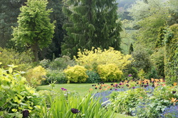 Picture of seasonal borders,mature shrubs and trees Dorothy Clive Garden
